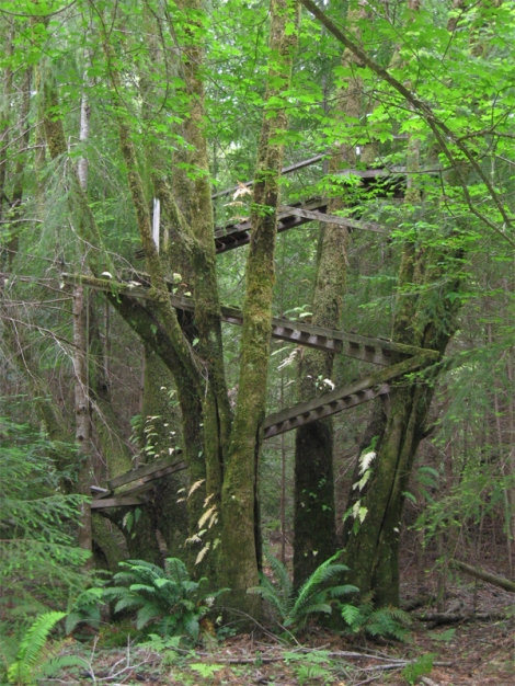 Tree House at Peach Tree Flat on the North Fork Gualala