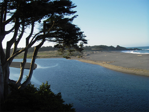 View of The Regional Park from the Bluff Top Trail